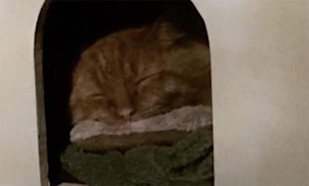 Мужчина нашел оставленного людьми одичавшего кота и стал заново его приручать. Видео
