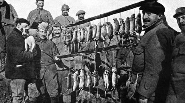 Первая Мировая, окопная война, результат охоты одного единственного специально натасканного терьера на кишащих во французских окопах крыс за 15 минут Весь Мир, история, фотографии