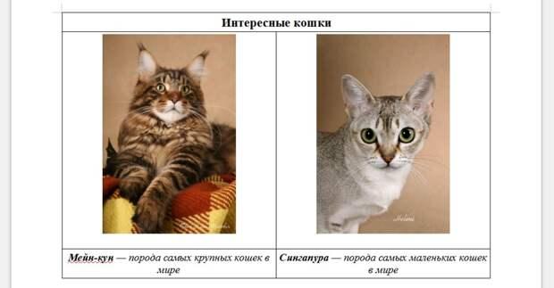 Эволюция кошек – странное исключение среди домашних животных