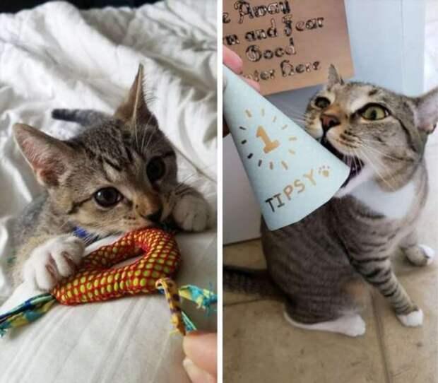 20+ котов, у которых были дела поважнее, чем повзрослеть и измениться