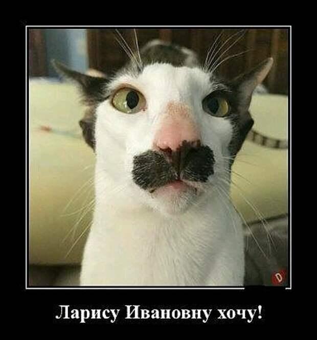 Блондинка спрашивает замужнюю подругу-брюнетку. -Почему ты называешь своего мужа «кот ученый?»...