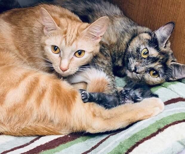 13 брошенных котят и кошек ютились в грязной клетке истории спасения, котята, кошки, помощь животным, спасение животных
