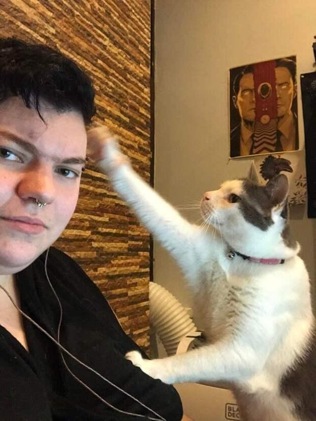 Когда главный в доме - кот