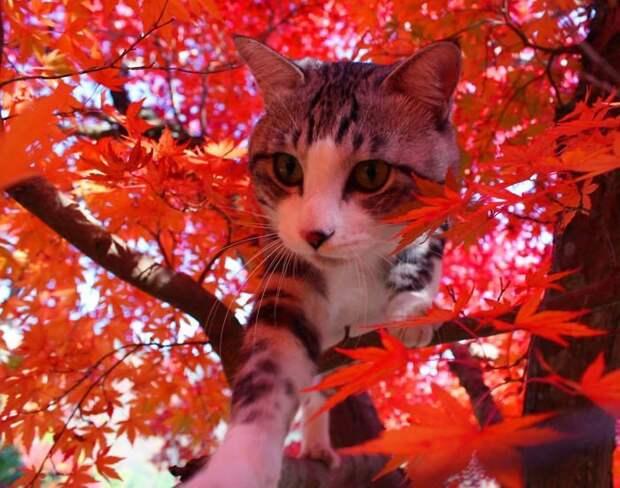"""Фото японского кота, которые заставят тебя сказать: """"Как скучно я живу..."""" коты, фото, это интересно"""