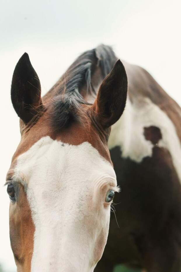 15 потрясающих фото животных с гетерохромией