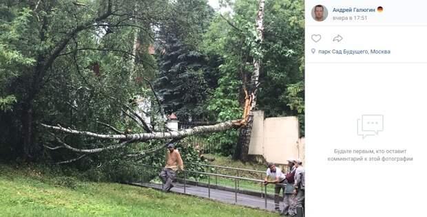 «Суперливень» повалил деревья в Саду Будущего