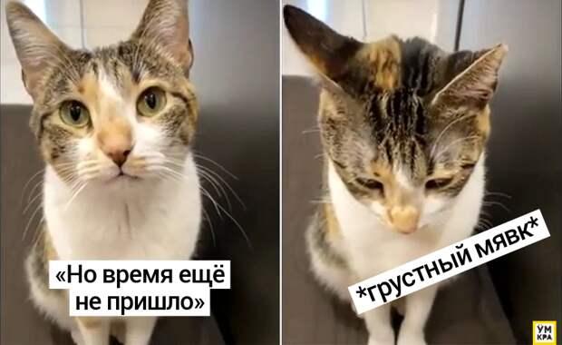 Кошка издала самый грустный «мявк» в истории