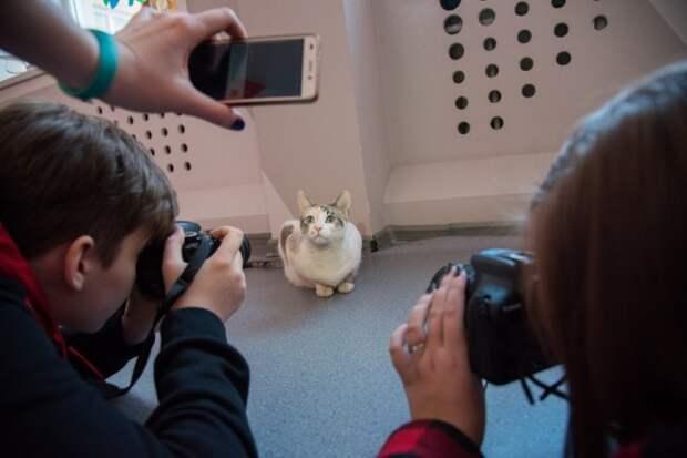 Уличная кошка забрела в фотостудию и получила работу модели