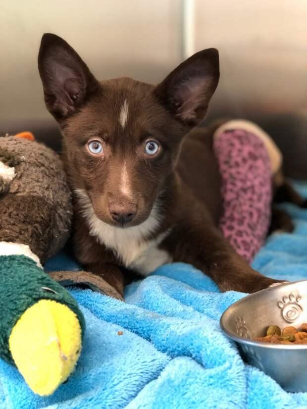 Уникальный щеночек со сломанной лапкой оказался в приюте болезни собак, история, история спасения, редкие животные, собака, собаки, спасение животных