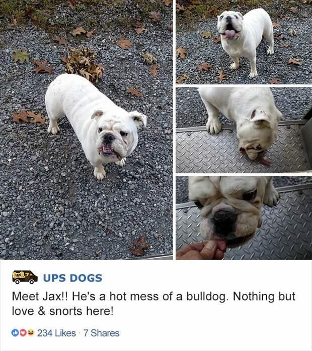 Лучший друг по переписке: как собаки встречают американских почтальонов интересное, почтальоны, фотографии