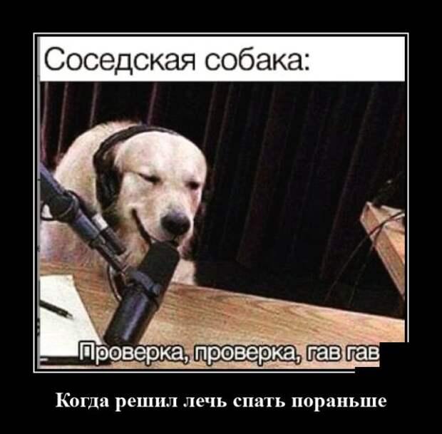 Демотиватор про соседскую собаку