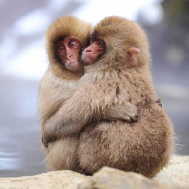 Любовь в мире животных Любовь, влюбленные животные., нежность