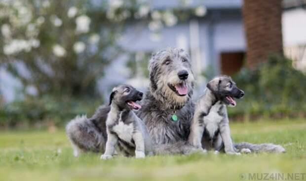 Десять необычайно странных историй о щенках