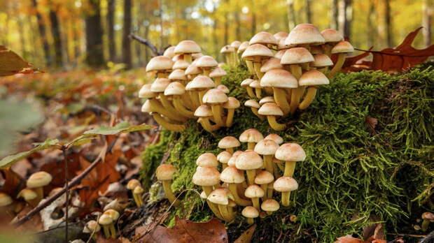 Сколько продлится грибной сезон в Подмосковье, рассказал миколог