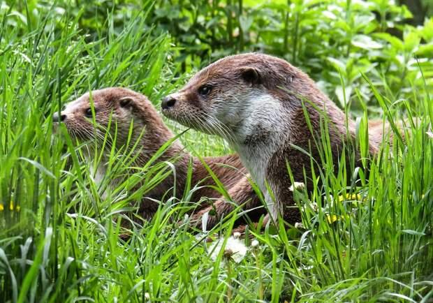 В парке «Северное Тушино» расскажут об обитателях Московского зоопарка