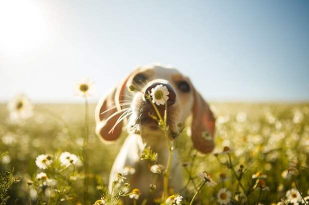 """2 место в категории """"Игры собак"""" - Родриго Капуски, Бразилия Кеннел клаб, животные, конкурс, лондон, портрет, собаки, фото, фотография года"""