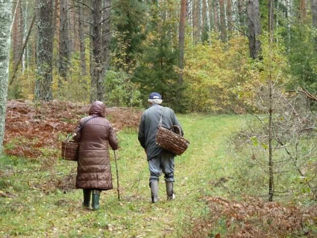 Управление по СЗАО Департамента ГОЧСиПБ рассказывает, что делать, если вы заблудились в лесу