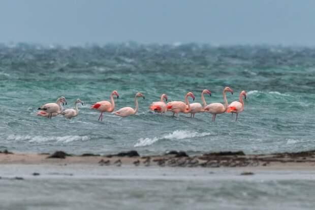 Розовые фламинго могут навсегда остаться в Крыму