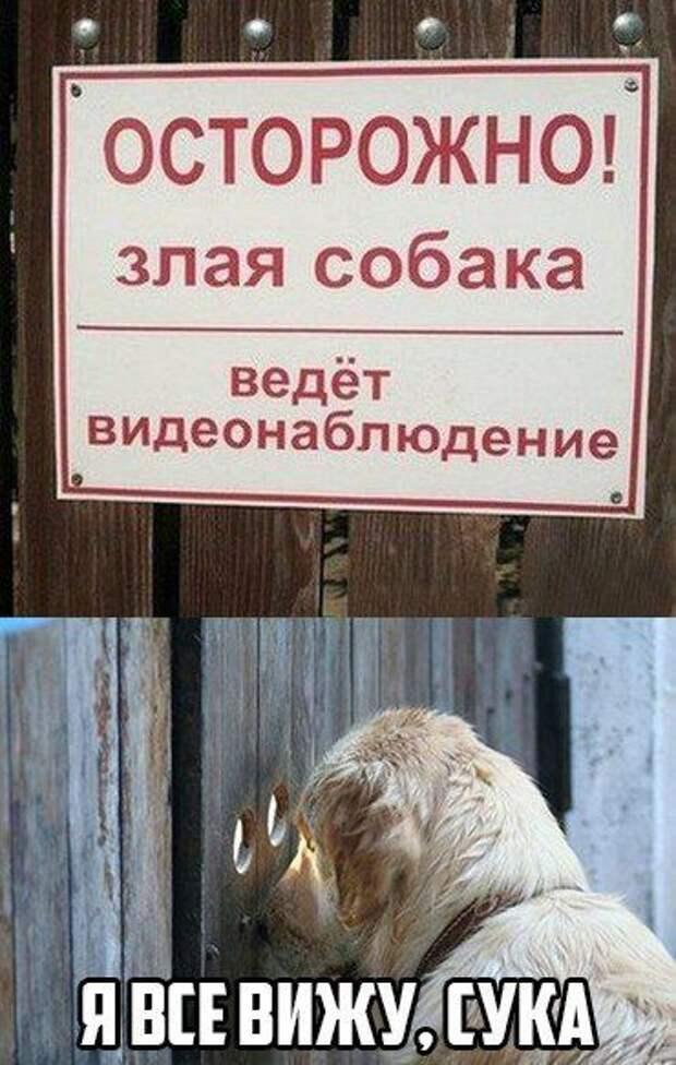 Забавные и позитивные картинки с надписями со смыслом (11 фото)