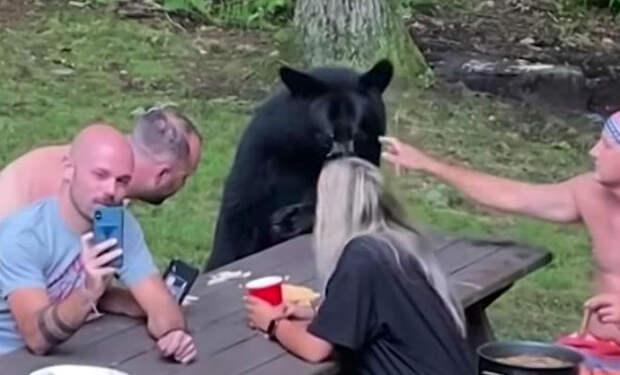 Люди сидели на пикнике в лесу, когда из чащи вышел медведь. Его посадили за стол и дали еды