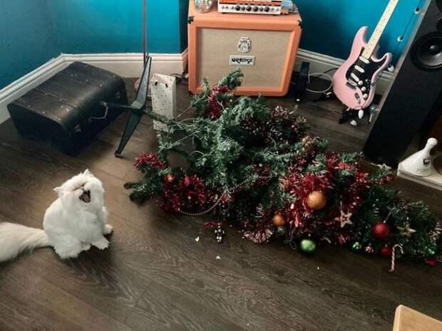 Котики задались целью похитить наше Рождество – 20 фото