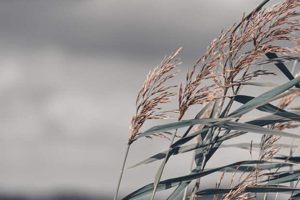 Жителей Удмуртии вновь предупредили об усилении ветра