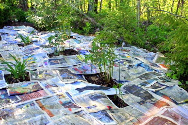 Влажную после полива почву накройте газетами.
