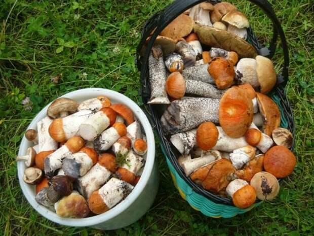 Роспотребнадзор: «Россияне, не собирайте грибы в ведра и пакеты!»