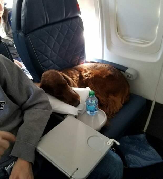 9. Занимают подлокотник... животные, пассажир, салон, самолет, собака, фотография