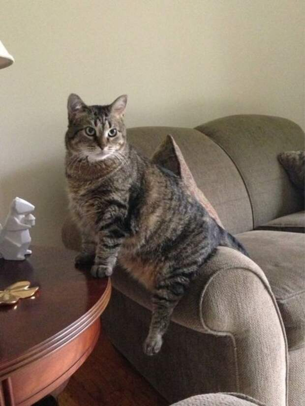 Субботний котопост кошки, приколы с котами., смешные коты