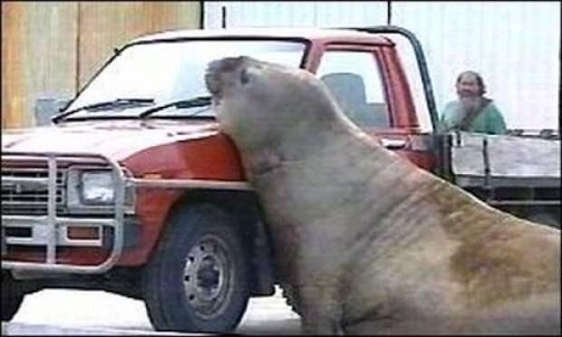 http://img.izismile.com/img/img3/20101027/640/cars_and_animals_640_07.jpg