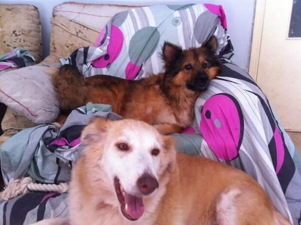 Теперь обе собаки абсолютно здоровы и выглядят неузнаваемыми в мире, голод, доброта, животные, люди, собака, спасение