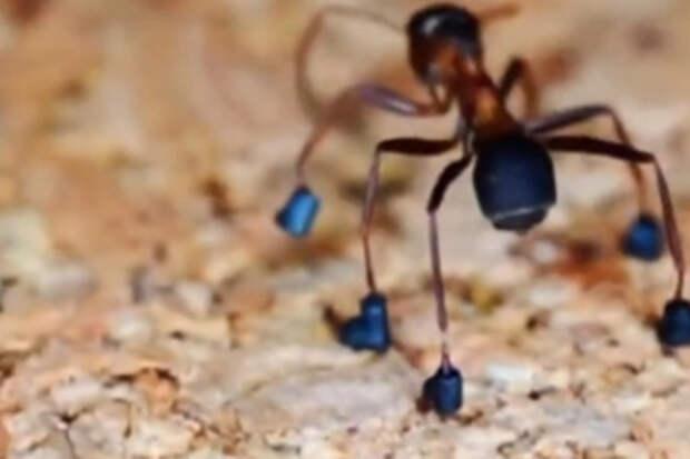 Миниатюрист сделал ботинки для муравья
