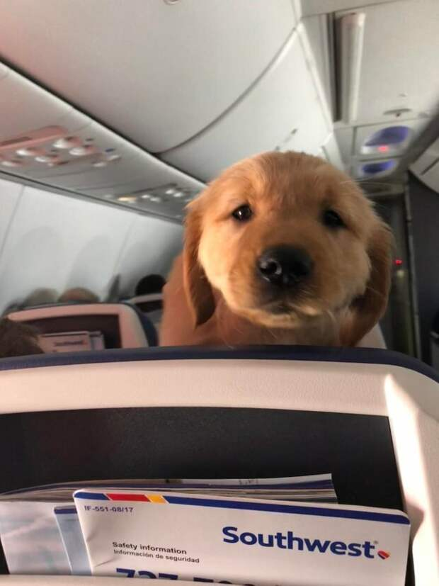 """2. Игнорируют знак """"Пристегните ремни безопасности"""" животные, пассажир, салон, самолет, собака, фотография"""