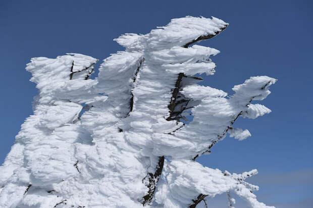 Снежные монстры старого вулкана в Японии