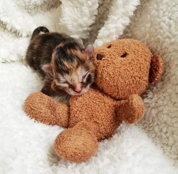 Люди выходили крошечного недоношенного котенка, размером меньше ладони