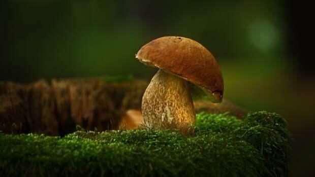 Менее 20 граммов грибов в день снижают риск развития рака на 45%