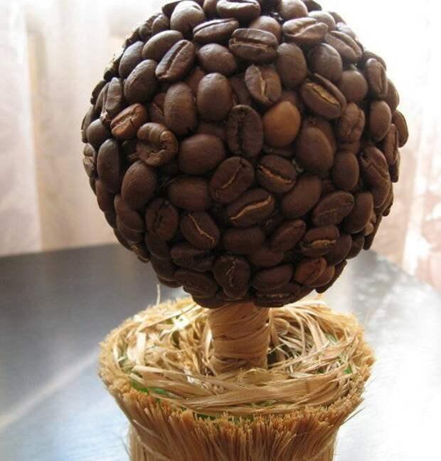 Кофейное дерево бонсай