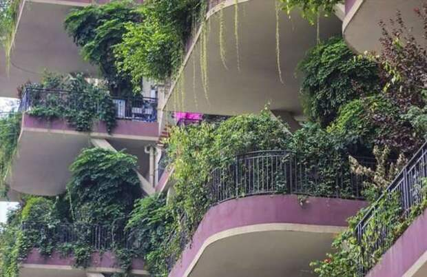 Новый жилой комплекс в Китае зарос зеленью и оккупирован комарами (11 фото + 1 видео)