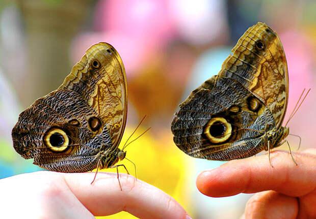 Животные-близнецы - 25 очаровательных фото-06