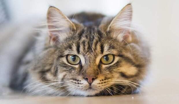 """Сайт знакомств """"Мамба"""" взял под опеку бездомных котов"""