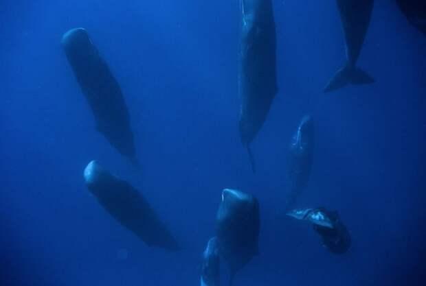 Вот как выглядят спящие киты: 6 редких фото