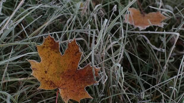 В Тюменской области ожидаются заморозки до -1 °С
