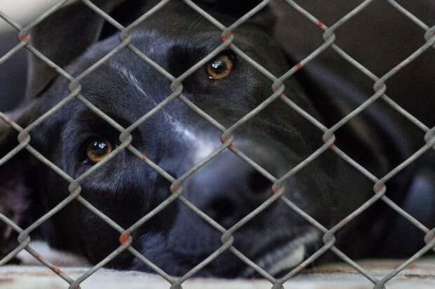В России установили нормы содержания приютов для животных