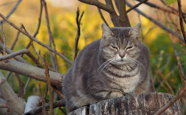 Безобидный толстый кот поставил на место собаку. Так он защищал своего «младшего братика»
