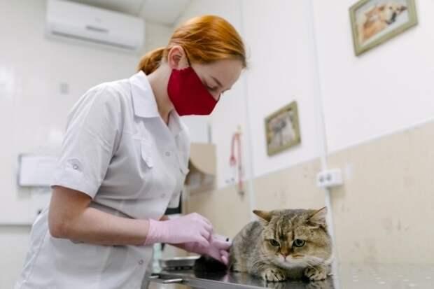 Российские учёные не планируют разрабатывать вакцину от COVID-19 для домашних животных