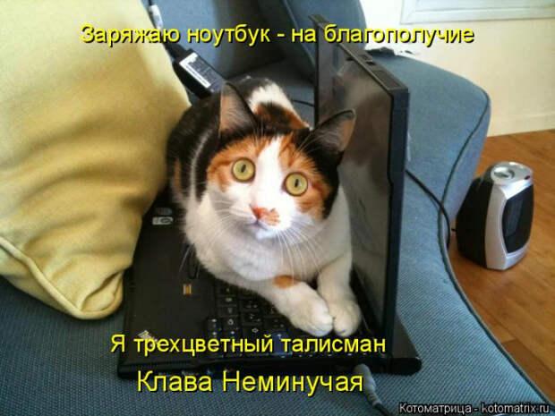 1586540391_kotomatrica-11 (640x480, 213Kb)