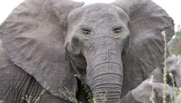Если бы у некоторых животных были глаза спереди, а не побокам