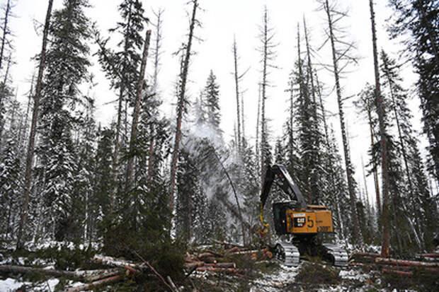Путин предупредил об угрозе потери леса