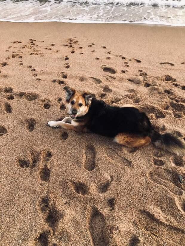 Бездомный пёс заметил людей на лавочке и захотел просто полежать рядом с ними, но ему подарили дом
